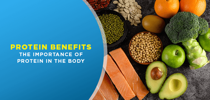 Protein Benefits | The Importance of Protein In The Body
