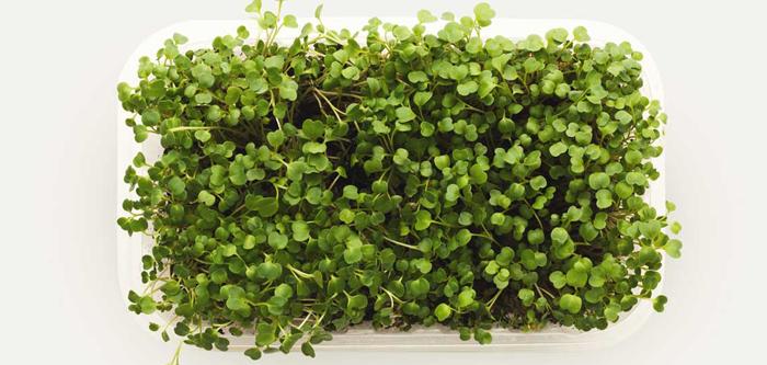 Power Packed Microgreens