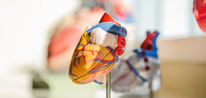 Heart Disease Prevention Tips to Keep Heart Diseases & Stroke At Bay