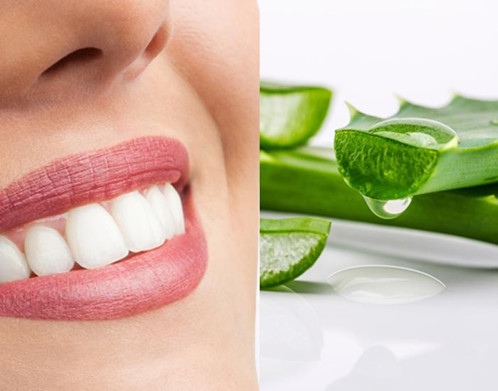 Aloe Vera - Improves Oral health