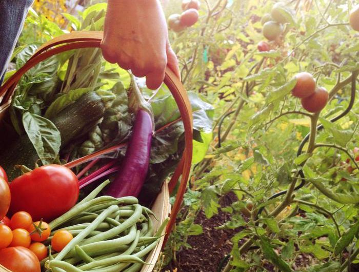 keto diet - Vegetables