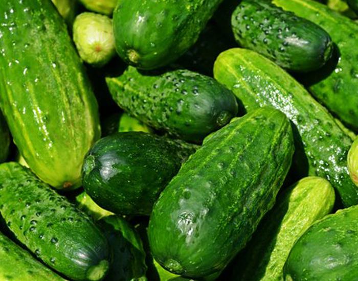 Cucumber - FITPASS
