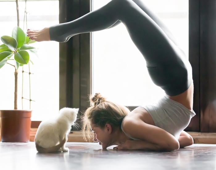 Get Active Indoors with yoga postures