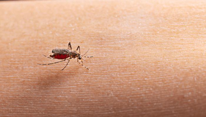 Dengue Treatment