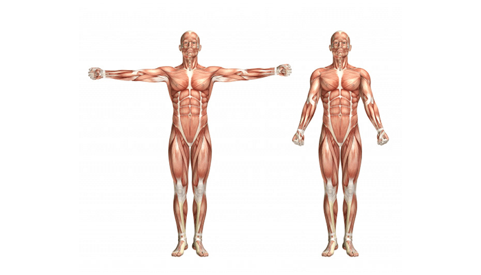 Focuses on multiple muscle groups